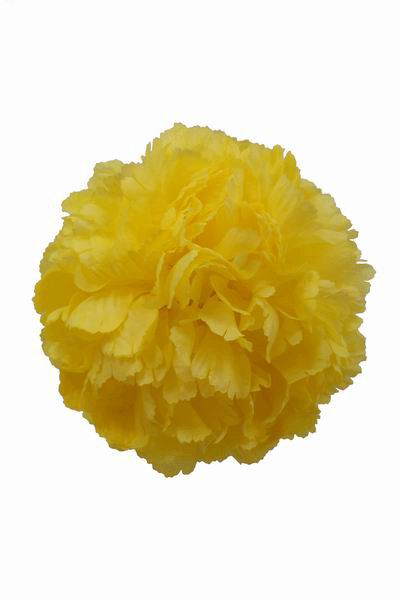 Yellow Giant Carnation. 16 cm